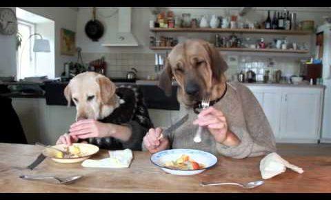 犬人間の食事