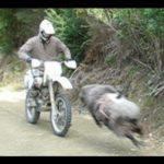 バイクなんて大っ嫌いだ!荒ぶる 羊 に狙われたライダーの運命